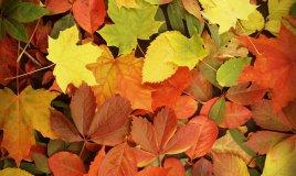 foglie-autunno-giardinaggio