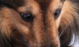 animale cane gatto allergia cibo intolleranza alimentazione dieta sottrattiva