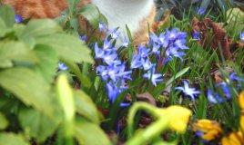 cane gatto piante pericolose problemi patologie