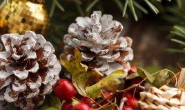 piante natalizie simbolo del natale