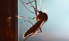 chef e scarafaggio