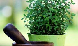 origano-pianta-consigli