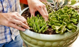 piante-piante grasse