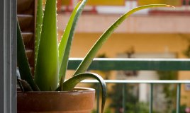 aria pulita cambio aria piante che assorbono sostanze tossiche formaldeide