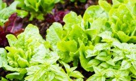 cascine orti frutta verdura ortaggi