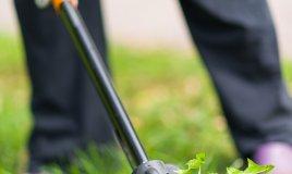 pulire-giardino-piantare