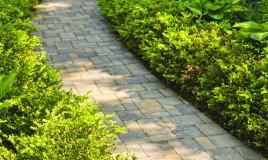 siepi-decorazione-giardino