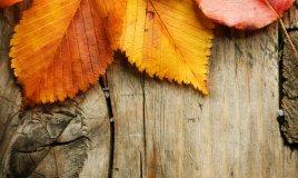 stagione autunno viaggio visita bosco boschi donne donna