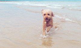 cane vacanza spiaggia legislazione consigli suggerimenti