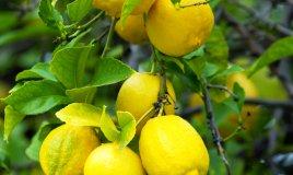 limone aiuto in casa pulire igienizzare profumare sgrassare detergere