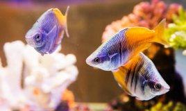 acquario, in, casa, pesci