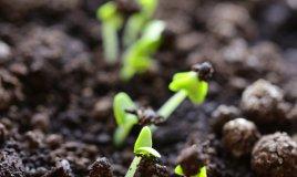 germoglio pianta semi