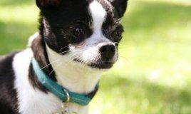 targhetta cane cucciolo nome