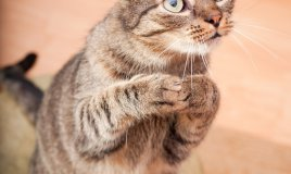 gatti, linguaggio
