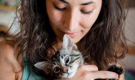 Gatti anti stress