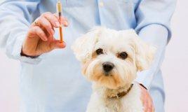 vaccinazione, cane, gatto, cucciolo