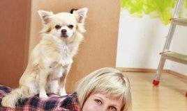 cucciolo, casa, accoglienza, cane, abituare, abitudini, educare