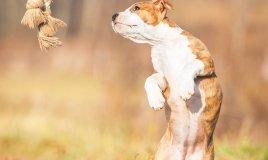 animali, noia, cuccioli