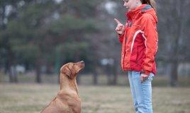 fido, cane, ascolto, ubbidienza, comunicazione