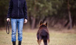 cane, padrone, rapporto