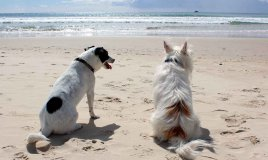 animali in vacanza