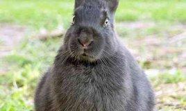 come costruire una gabbia per conigli
