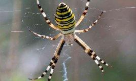 sognare ragni significato