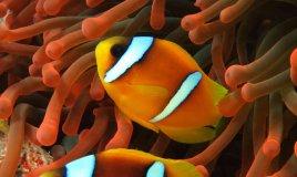 pesci oroscopo