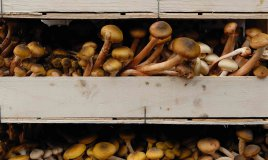 come coltivare i funghi in casa