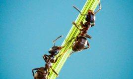 sognare le formiche significato