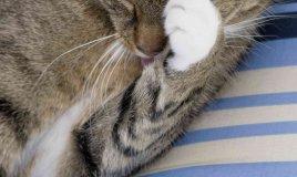 come pulire occhi gattini