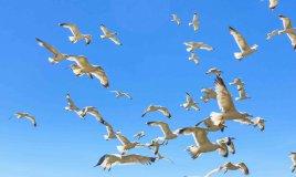 sognare uccelli significato