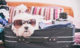 cosa mettere in valigia per il cane in vacanza