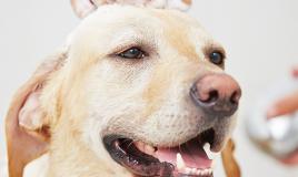 Salute del naso del cane freddo che cola asciutto donnad - Fare il bagno al gatto ...