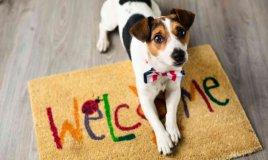 come adottare e allevare cuccioli di cane