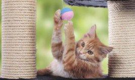come costruire giochi per gatti