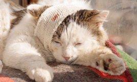 Come disinfettare una ferita a un gatto