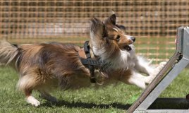 realizzare giochi intelligenti per cani