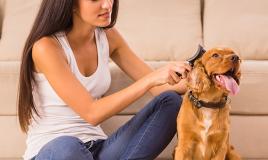 Come toelettare a casa il tuo cane