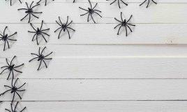 come eliminare i ragni