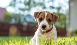 sterilizzazione cane costi convalescenza