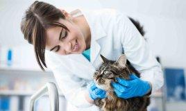 Sterilizzazione del gatto costi, decorso post operatorio e dieta