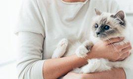 animali, rogna, gatto