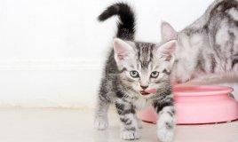 gatti, animali, alimentazione