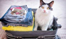 vacanza, gatto, stress