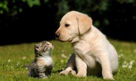 adottare un cucciolo