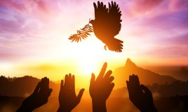 giornata mondiale pace, giornata internazionale pace, frasi pace