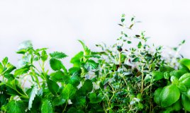 coltivare erbe aromatiche, coltivare piante aromatiche