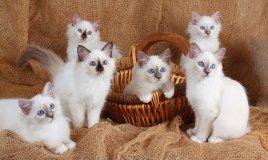 allattare cuccioli di gatto, allattamento artificiale cuccioli di gatto