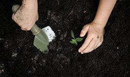 fare giardinaggio con bambini, come coltivare con bambini